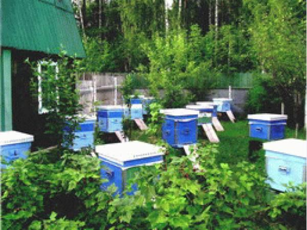 У Вас есть Пасека? Всё для орган-и и зан-я пчеловодством есть у НАС!