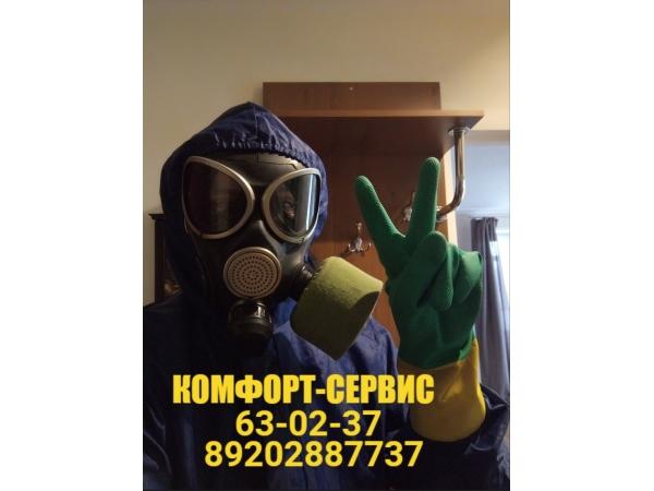 Бесплатная обработка от насекомых и вирусов в Орле