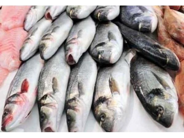 ПРОФИТ Торговля оптовая рыбой