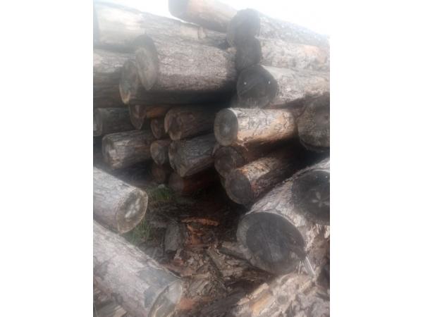 ПИ106048 Продажа древесины