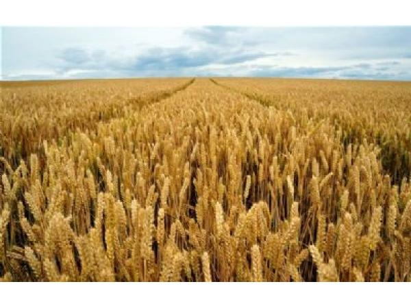 Земельный участок сельхозназначения 223 Га
