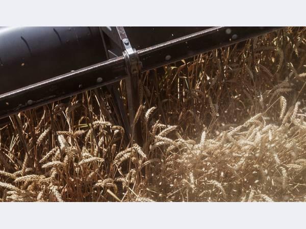 ВТБ продал почти половину зернового бизнеса