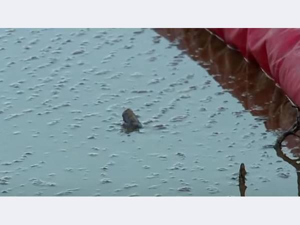 Разлив нефти произошел в результате прорыва трубопровода в ЯНАО